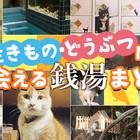 京都で「生きもの・どうぶつに出会える銭湯」をまとめてみました!!