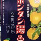 鹿児島県阿久根のボンタンが浮かぶボンタン湯。京都の銭湯各地で開催!